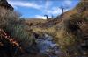 Conocé el proyecto Reserva Natural Educativa Cañadón La Dorotea